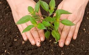 Thực hiện trồng cây mỗi năm